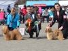 bob_bos_rauma_fi_2012_lhasa-apso