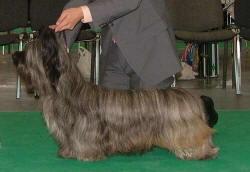 TOP Skye 2006