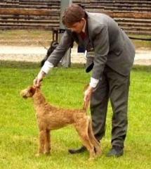 TOP Irish Terrier 2005